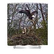 Bald Eagles At Nest Shower Curtain