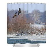 Bald Eagles At Providence Dam 1107 Shower Curtain