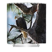 Bald Eagles Eye View Shower Curtain
