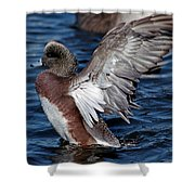 Bald Pate Shower Curtain by Skip Willits