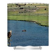 Baldy And Bull Shower Curtain
