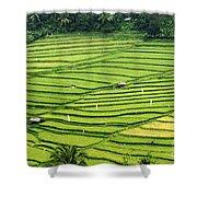 Bali Indonesia Rice Fields Shower Curtain