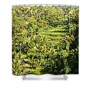Bali Sayan Rice Terraces Shower Curtain