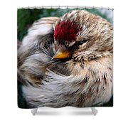 Ball Of Feathers Shower Curtain