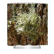 Ball Of Moss Shower Curtain