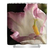 Balloon Flower Shower Curtain