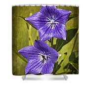 Balloon Flower Shower Curtain by Marcia Colelli