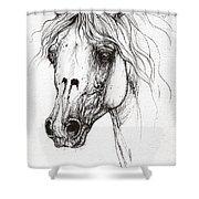 Balon Polish Arabian Horse Portrait 2  Shower Curtain