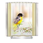 Baltimore Oriole 4348-11 - Bird Shower Curtain