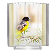 Baltimore Oriole 4348-12 Shower Curtain