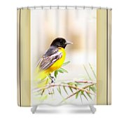 Baltimore Oriole - 4348-14 Shower Curtain
