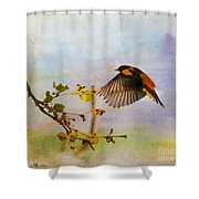 Baltimore Oriole Arrival  Shower Curtain