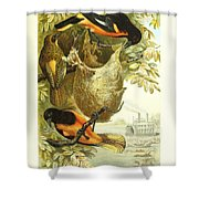 Baltimore Orioles Shower Curtain by Philip Ralley