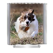 Bama - Pets - Dogs Shower Curtain