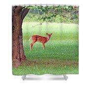 Bambi Days Shower Curtain