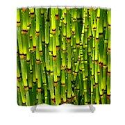 Bamboo Curtain Shower Curtain
