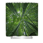 Bamboo Forest 1 Shower Curtain