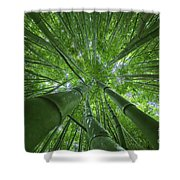 Bamboo Forest 2 Shower Curtain