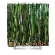 Bamboo Forest 3 Shower Curtain