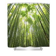 Bamboo Forest 5 Shower Curtain