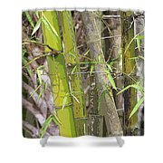 Bamboo I Poster Look Shower Curtain