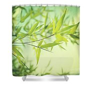 Bamboo In The Sun Shower Curtain by Priska Wettstein