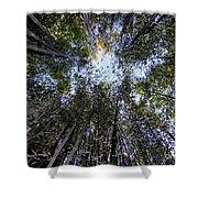 Bamboo Sky Shower Curtain