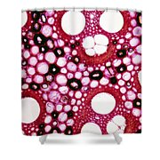 Bamboo Stem Bambusa Arundinacea Shower Curtain by De Agostini Picture Library