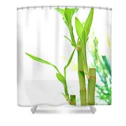 Bamboo Stems And Leaves Shower Curtain