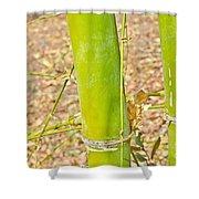 Bamboo Stems Shower Curtain