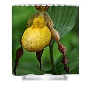 Banana Curls Shower Curtain