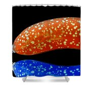 Banana Fantasy Shower Curtain