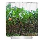 Banana Field Shower Curtain
