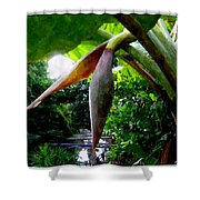 Banana Flower Shower Curtain