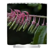 Banana Orchid Show Shower Curtain