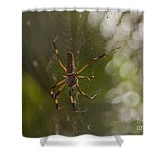 Banana Spider Shower Curtain