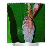 Banana Tree Bud Shower Curtain