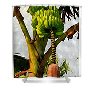 Banana Trees With Fruits And Flower In Lush Tropical Garden Shower Curtain