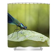 Banded Demoiselle  Shower Curtain