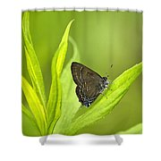 Banded Hairstreak Butterfly Resting On Green Leaf Shower Curtain