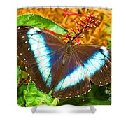 Banded Morpho Butterfly Shower Curtain