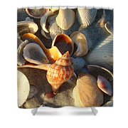 Banded Tulip 1 Shower Curtain