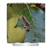 Banded Tussock Moth Caterpillar Shower Curtain