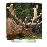 Banff Elk Shower Curtain
