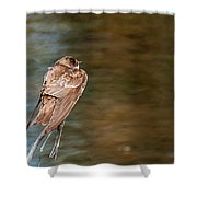 Bank Swallow Resting Shower Curtain