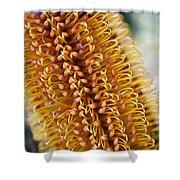 Banksia Flower Shower Curtain