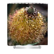 Banksia  Shower Curtain
