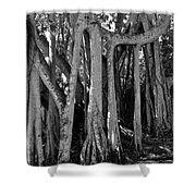 Banyan Trees Shower Curtain