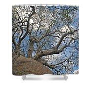 baobab from Madagascar 9 Shower Curtain