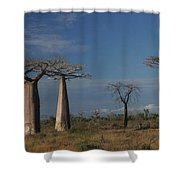 baobab parkway of Madagascar Shower Curtain